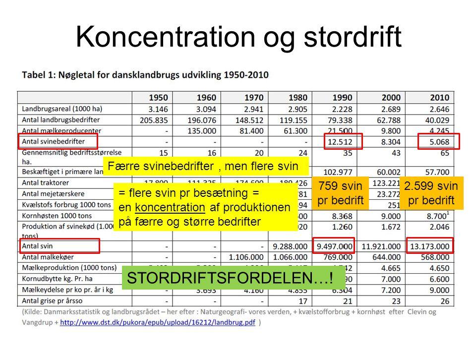 Koncentration og stordrift Færre svinebedrifter, men flere svin = flere svin pr besætning = en koncentration af produktionen på færre og større bedrifter STORDRIFTSFORDELEN….