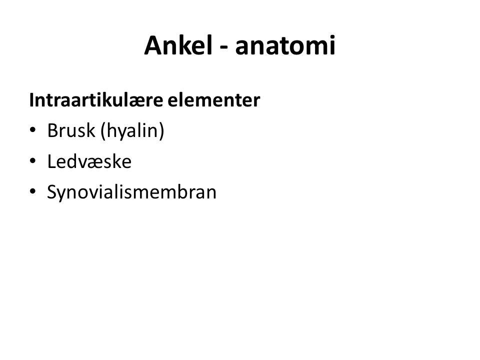 Ankel - anatomi Intraartikulære elementer Brusk (hyalin) Ledvæske Synovialismembran