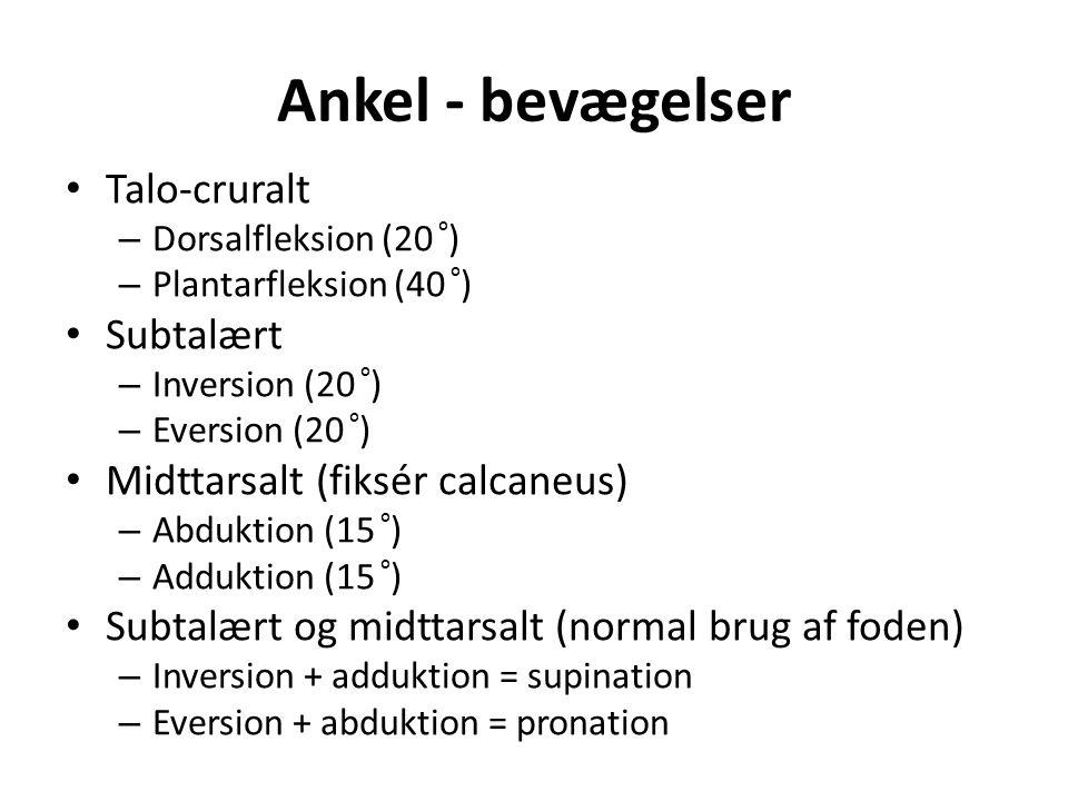 Ankel - bevægelser Talo-cruralt – Dorsalfleksion (20 ⁰ ) – Plantarfleksion (40 ⁰ ) Subtalært – Inversion (20 ⁰ ) – Eversion (20 ⁰ ) Midttarsalt (fiksé