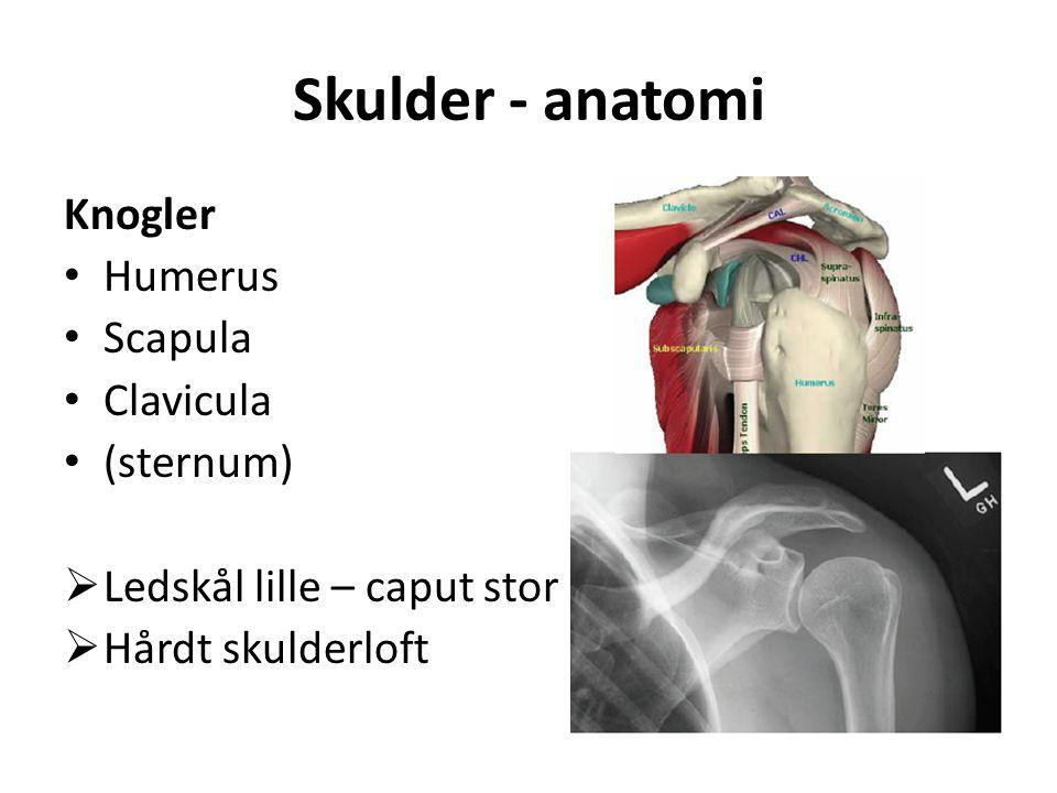 Skulder - anatomi Knogler Humerus Scapula Clavicula (sternum)  Ledskål lille – caput stor  Hårdt skulderloft