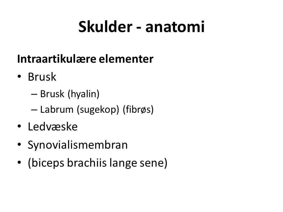 Skulder - anatomi Intraartikulære elementer Brusk – Brusk (hyalin) – Labrum (sugekop) (fibrøs) Ledvæske Synovialismembran (biceps brachiis lange sene)