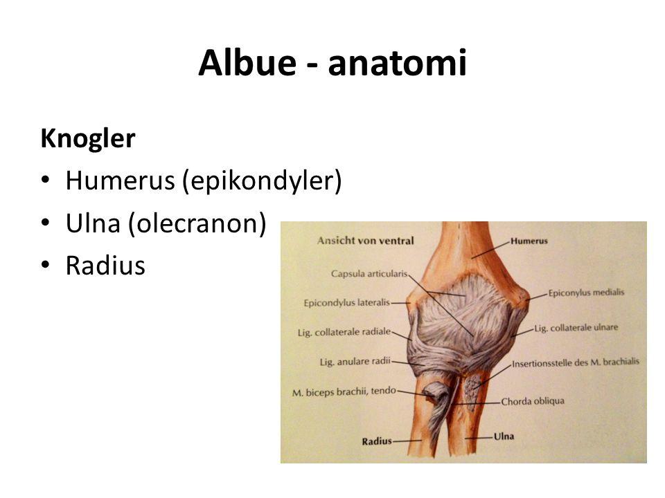 Albue - anatomi Knogler Humerus (epikondyler) Ulna (olecranon) Radius