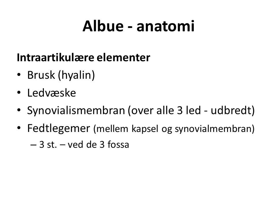 Albue - anatomi Intraartikulære elementer Brusk (hyalin) Ledvæske Synovialismembran (over alle 3 led - udbredt) Fedtlegemer (mellem kapsel og synovialmembran) – 3 st.
