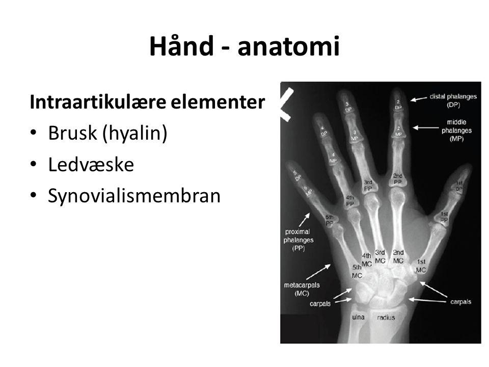 Hånd - anatomi Intraartikulære elementer Brusk (hyalin) Ledvæske Synovialismembran