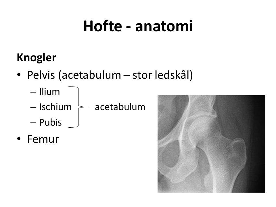 Hofte - anatomi Knogler Pelvis (acetabulum – stor ledskål) – Ilium – Ischium acetabulum – Pubis Femur
