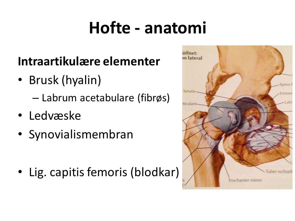 Hofte - anatomi Intraartikulære elementer Brusk (hyalin) – Labrum acetabulare (fibrøs) Ledvæske Synovialismembran Lig.