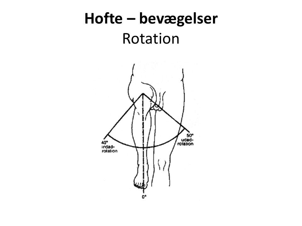 Hofte – bevægelser Rotation