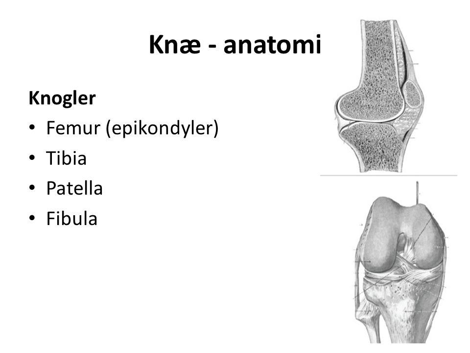 Knæ - anatomi Knogler Femur (epikondyler) Tibia Patella Fibula