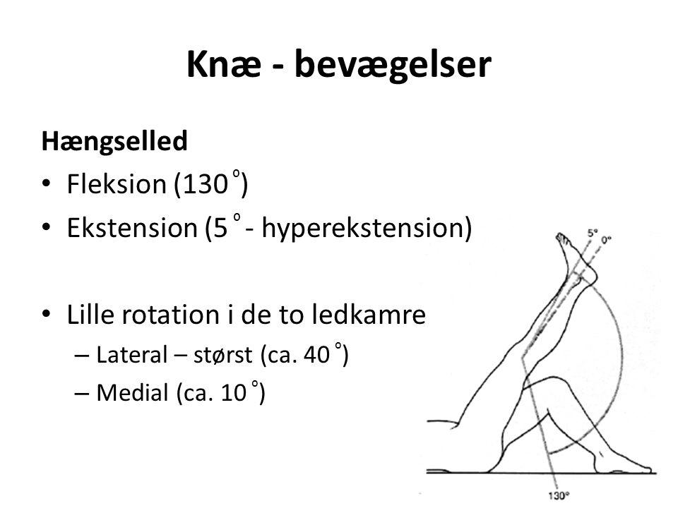 Knæ - bevægelser Hængselled Fleksion (130 ⁰ ) Ekstension (5 ⁰ - hyperekstension) Lille rotation i de to ledkamre – Lateral – størst (ca.