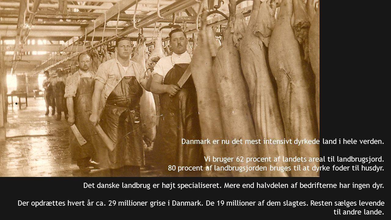 Danmark er nu det mest intensivt dyrkede land i hele verden.