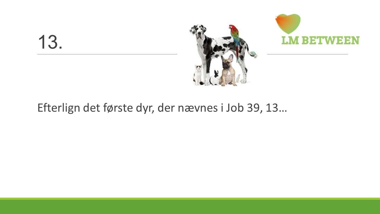 13. Efterlign det første dyr, der nævnes i Job 39, 13…