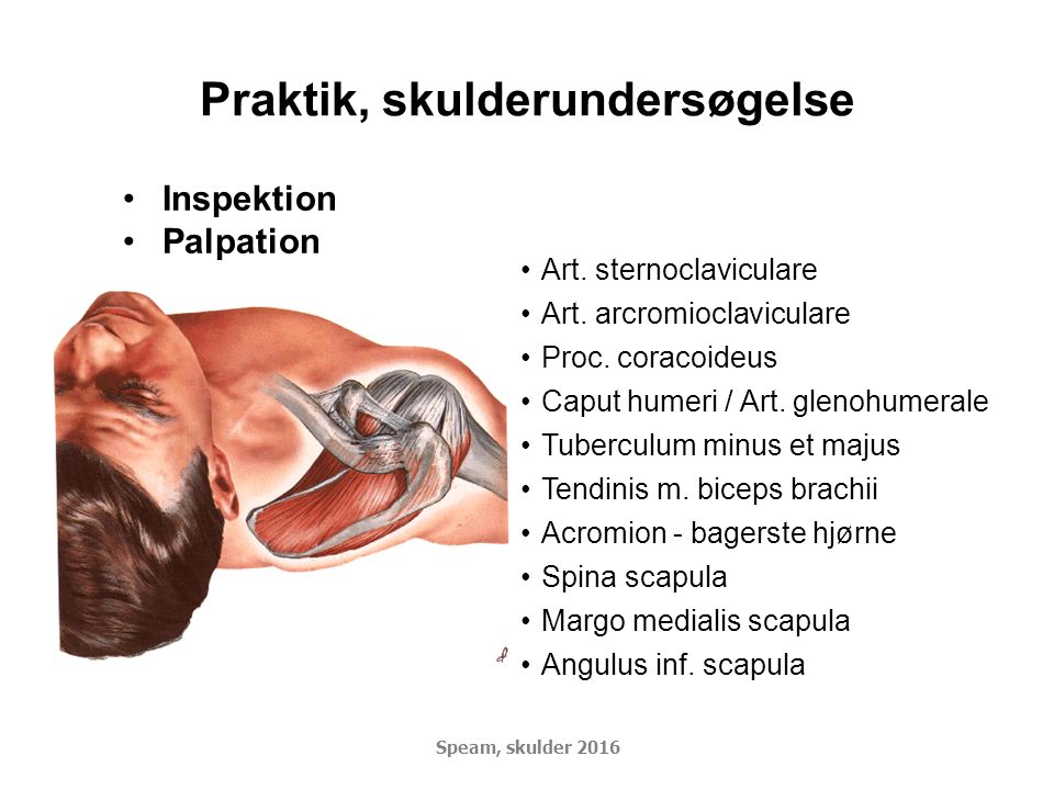 Praktik, skulderundersøgelse Inspektion Palpation Art.