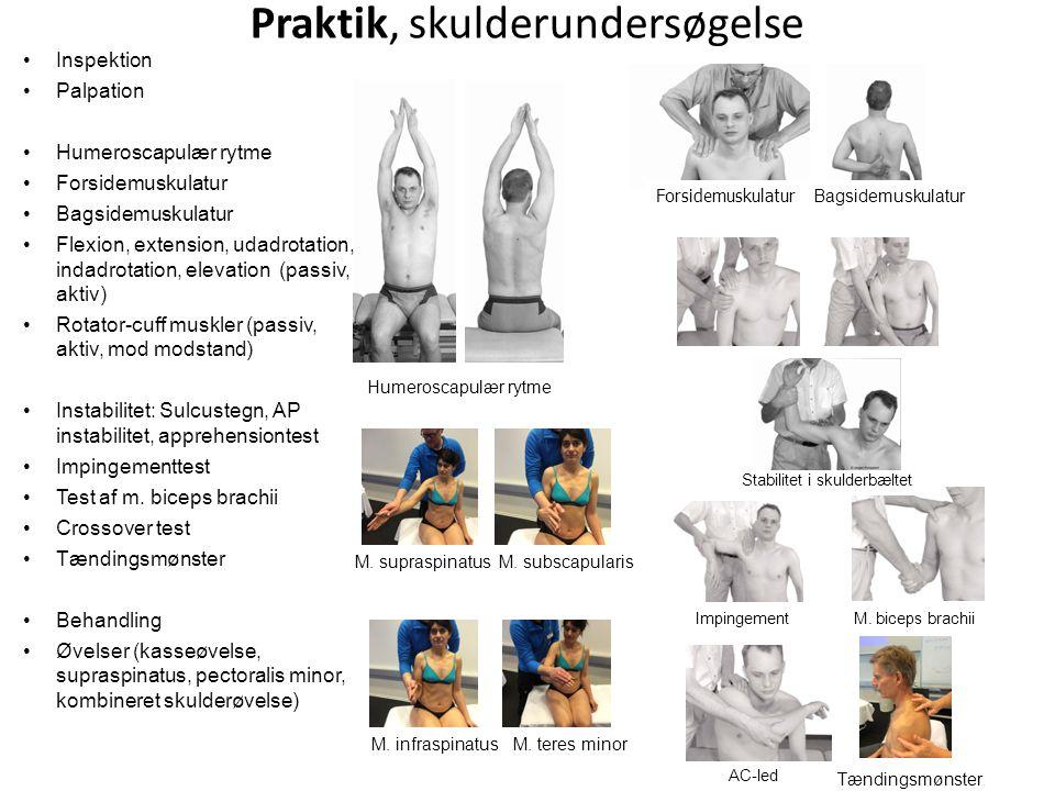 Praktik, skulderundersøgelse Humeroscapulær rytme Impingement AC-led M. biceps brachii Stabilitet i skulderbæltet Inspektion Palpation Humeroscapulær