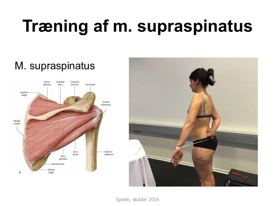 Træning af m. supraspinatus M. supraspinatus Speam, skulder 2016