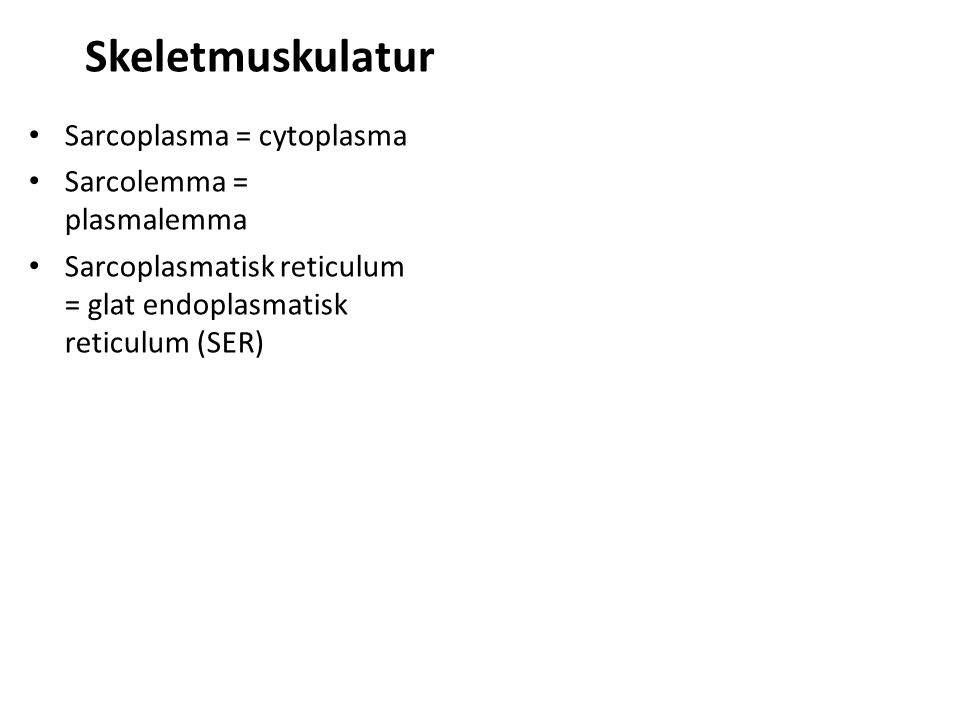 Skeletmuskulatur Sarcoplasma = cytoplasma Sarcolemma = plasmalemma Sarcoplasmatisk reticulum = glat endoplasmatisk reticulum (SER)
