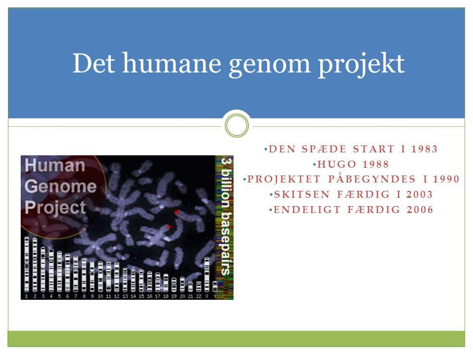 Det humane genom projekt DEN SPÆDE START I 1983 HUGO 1988 PROJEKTET PÅBEGYNDES I 1990 SKITSEN FÆRDIG I 2003 ENDELIGT FÆRDIG 2006