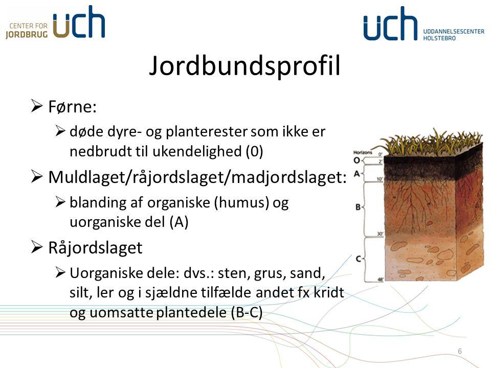 Jordbundsprofil  Førne:  døde dyre- og planterester som ikke er nedbrudt til ukendelighed (0)  Muldlaget/råjordslaget/madjordslaget:  blanding af organiske (humus) og uorganiske del (A)  Råjordslaget  Uorganiske dele: dvs.: sten, grus, sand, silt, ler og i sjældne tilfælde andet fx kridt og uomsatte plantedele (B-C) 6