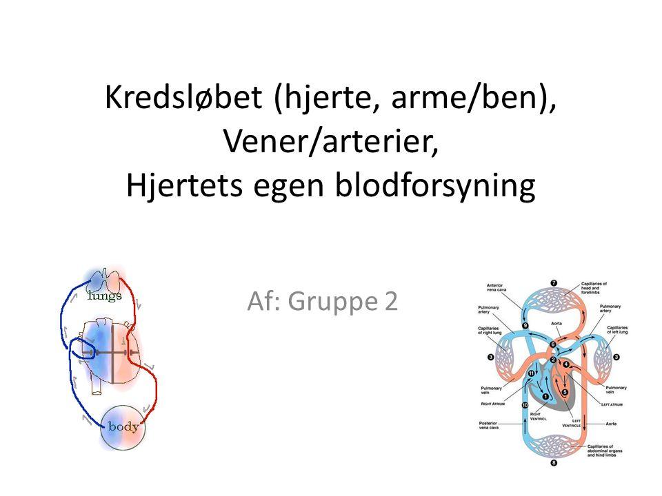 Kredsløbet (hjerte, arme/ben), Vener/arterier, Hjertets egen blodforsyning Af: Gruppe 2
