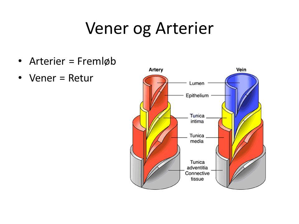 Vener og Arterier Arterier = Fremløb Vener = Retur