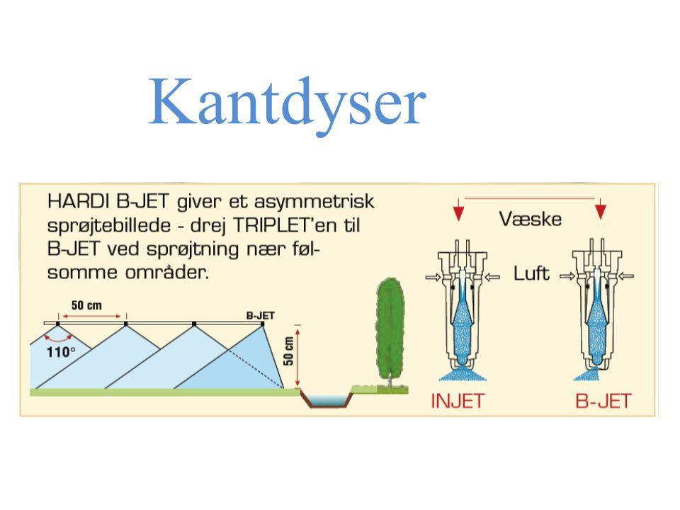 Kantdyser