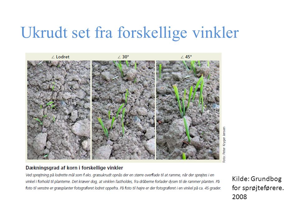 Ukrudt set fra forskellige vinkler Kilde: Grundbog for sprøjteførere. 2008