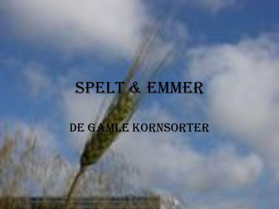 Spelt & Emmer De Gamle Kornsorter