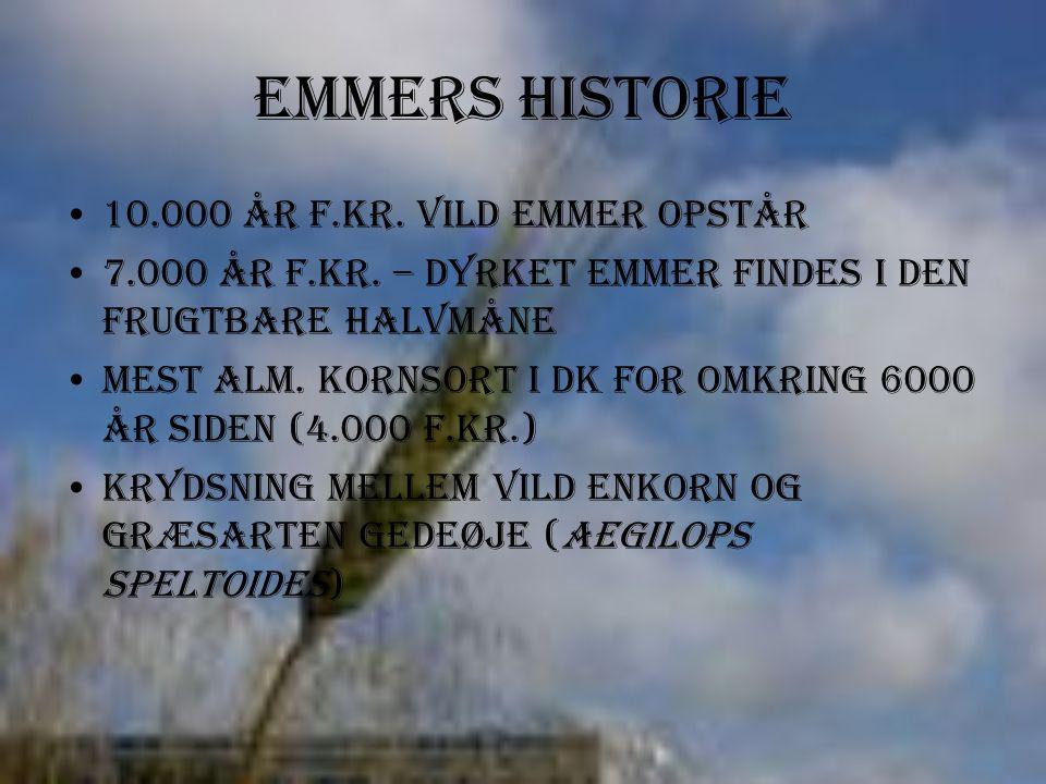 Emmers Historie 10.000 år f.kr. Vild emmer opstår 7.000 år f.kr.