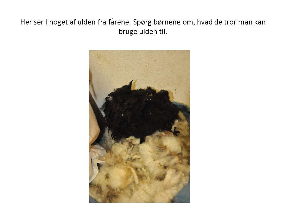 Her ser I noget af ulden fra fårene. Spørg børnene om, hvad de tror man kan bruge ulden til.