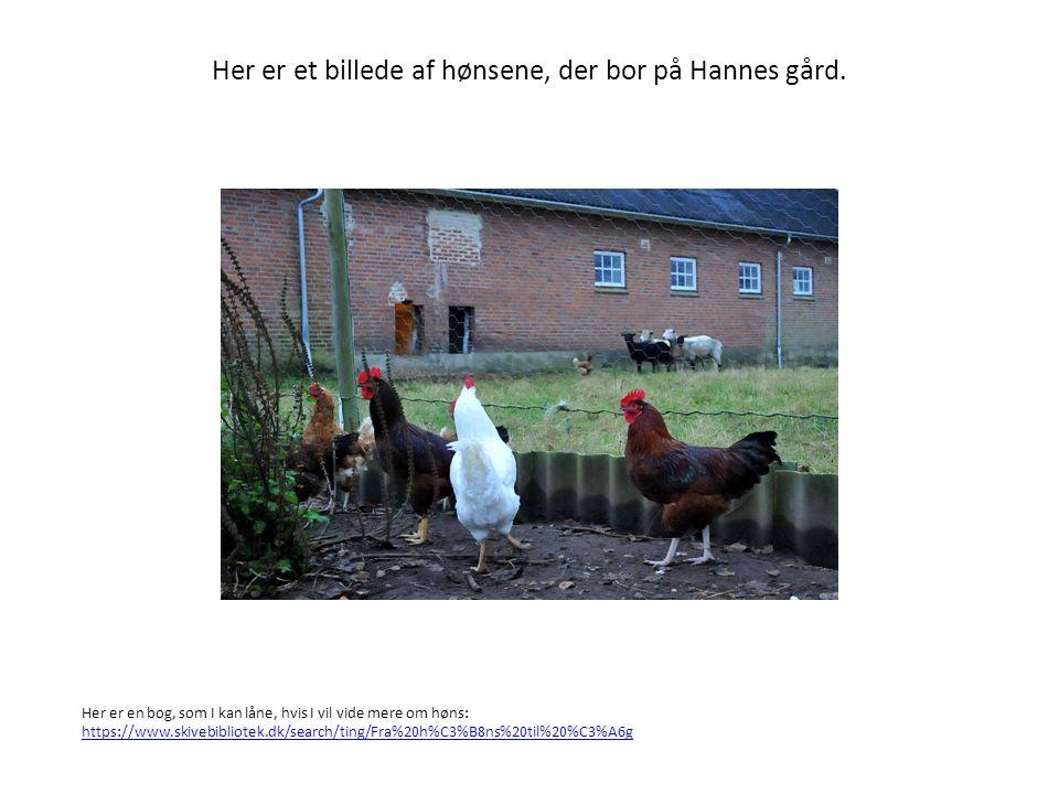 Hver høne lægger et æg om dagen.