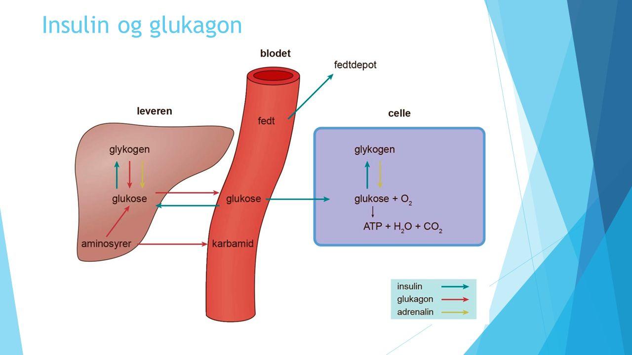 Insulin og glukagon