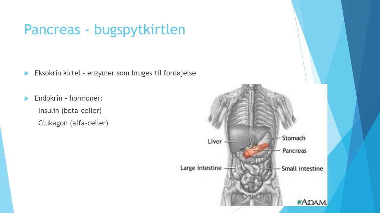 Pancreas - bugspytkirtlen  Eksokrin kirtel – enzymer som bruges til fordøjelse  Endokrin – hormoner: Insulin (beta-celler) Glukagon (alfa-celler)
