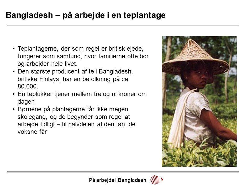 Bangladesh – på arbejde i en teplantage •Teplantagerne, der som regel er britisk ejede, fungerer som samfund, hvor familierne ofte bor og arbejder hel