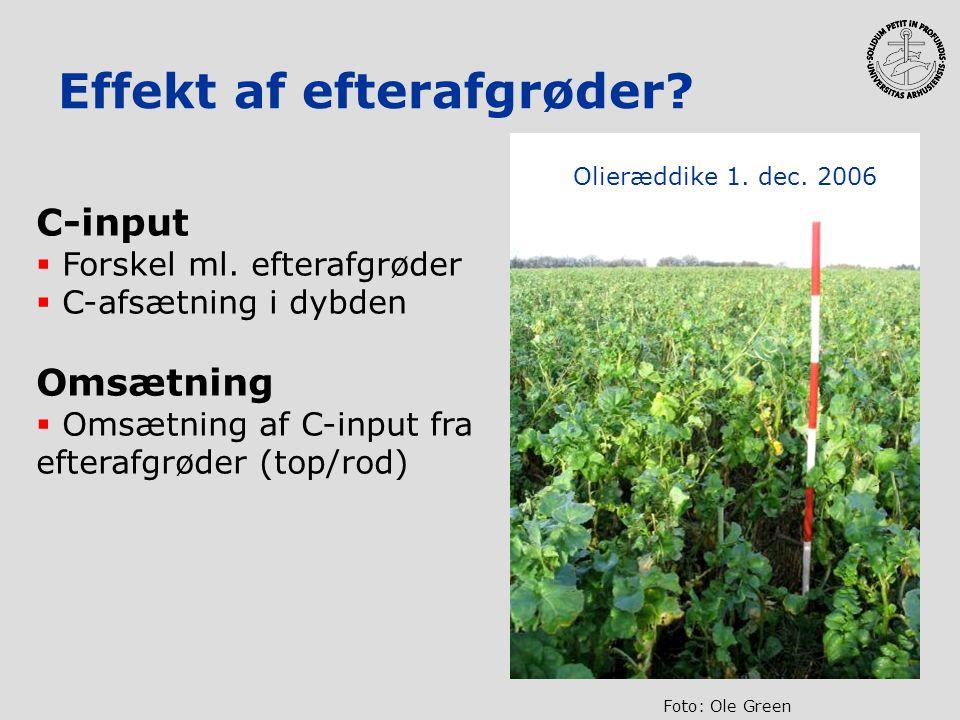 Effekt af efterafgrøder? C-input  Forskel ml. efterafgrøder  C-afsætning i dybden Omsætning  Omsætning af C-input fra efterafgrøder (top/rod) Olier