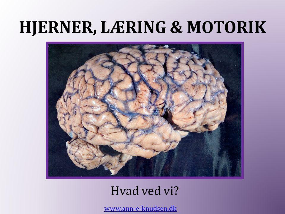 HJERNER, LÆRING & MOTORIK Hvad ved vi? www.ann-e-knudsen.dk
