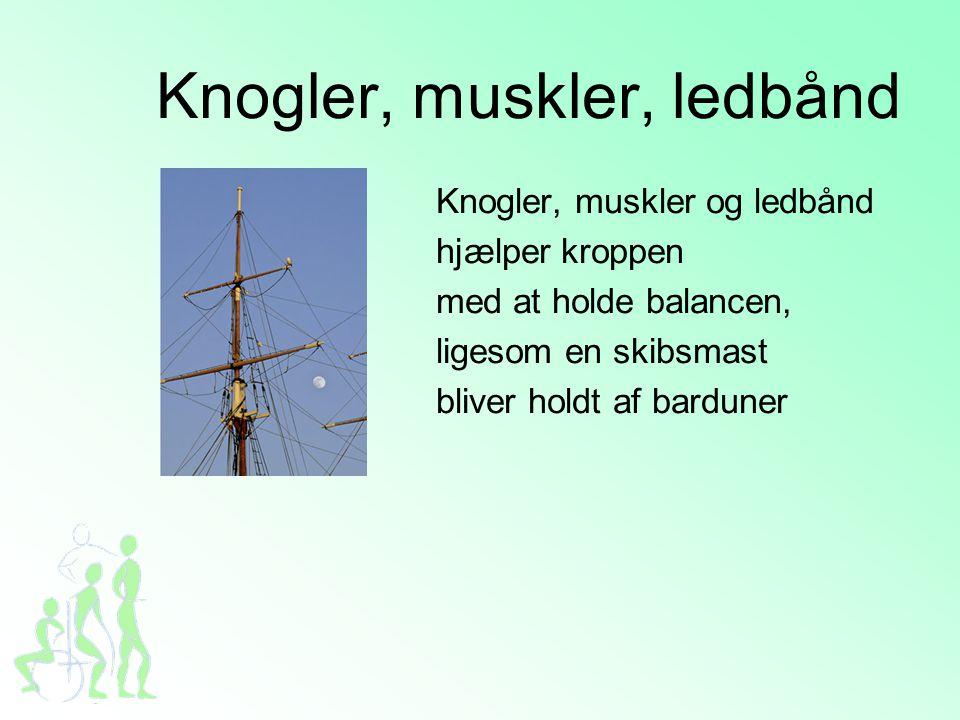 Knogler, muskler, ledbånd Knogler, muskler og ledbånd hjælper kroppen med at holde balancen, ligesom en skibsmast bliver holdt af barduner