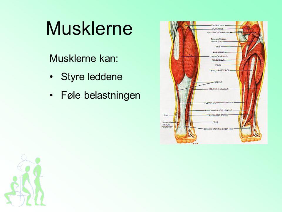 Musklerne Musklerne kan: •Styre leddene •Føle belastningen