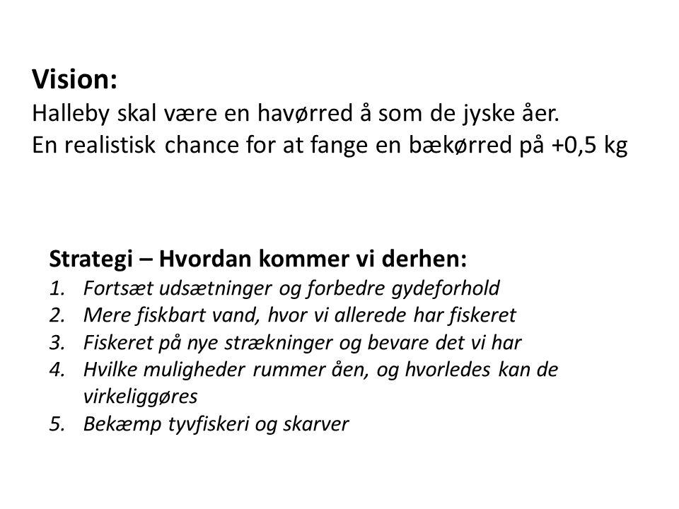 Vision: Halleby skal være en havørred å som de jyske åer. En realistisk chance for at fange en bækørred på +0,5 kg Strategi – Hvordan kommer vi derhen