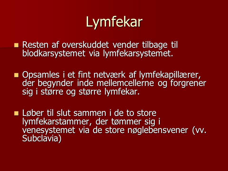 Lymfekar  Resten af overskuddet vender tilbage til blodkarsystemet via lymfekarsystemet.