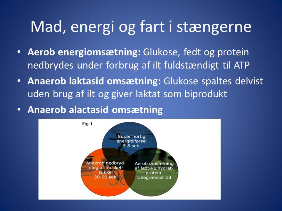 Mad, energi og fart i stængerne • Aerob energiomsætning: Glukose, fedt og protein nedbrydes under forbrug af ilt fuldstændigt til ATP • Anaerob laktas