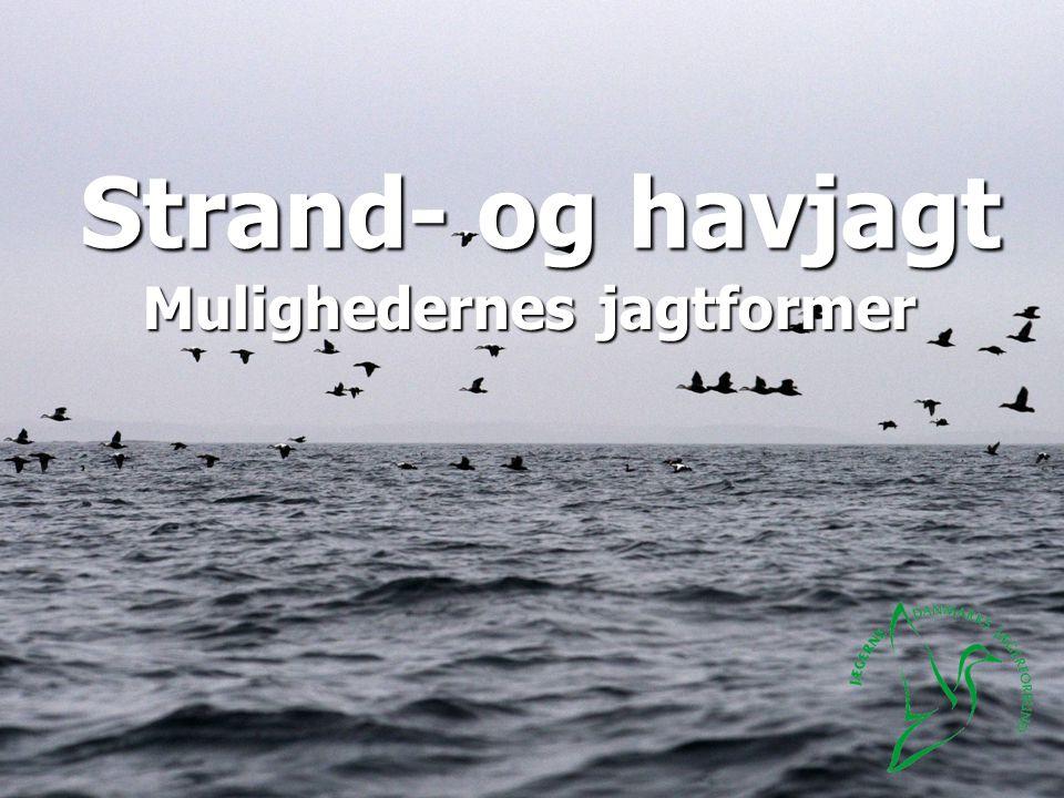 Strand- og havjagt Mulighedernes jagtformer