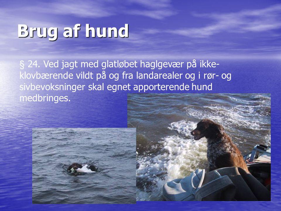 Brug af hund § 24. Ved jagt med glatløbet haglgevær på ikke- klovbærende vildt på og fra landarealer og i rør- og sivbevoksninger skal egnet apportere
