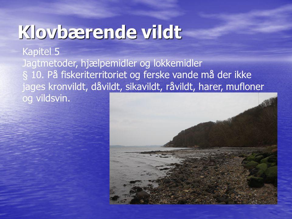 Klovbærende vildt Kapitel 5 Jagtmetoder, hjælpemidler og lokkemidler § 10. På fiskeriterritoriet og ferske vande må der ikke jages kronvildt, dåvildt,