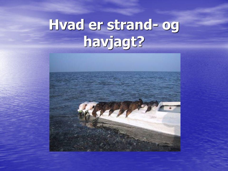 Hvad er strand- og havjagt?