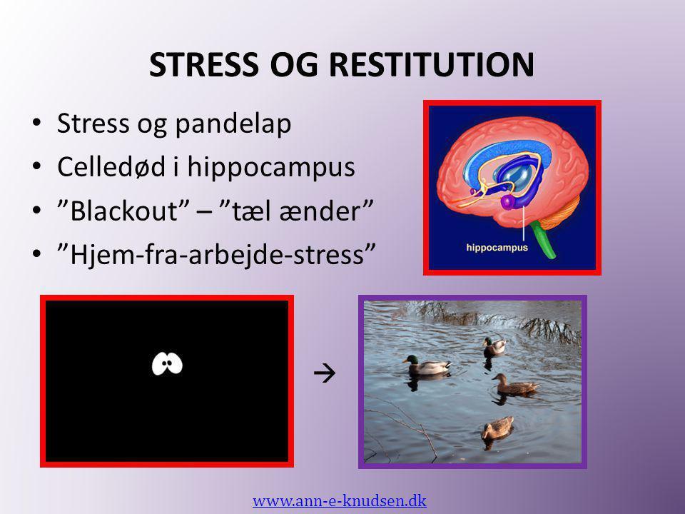 """STRESS OG RESTITUTION • Stress og pandelap • Celledød i hippocampus • """"Blackout"""" – """"tæl ænder"""" • """"Hjem-fra-arbejde-stress"""" www.ann-e-knudsen.dk """