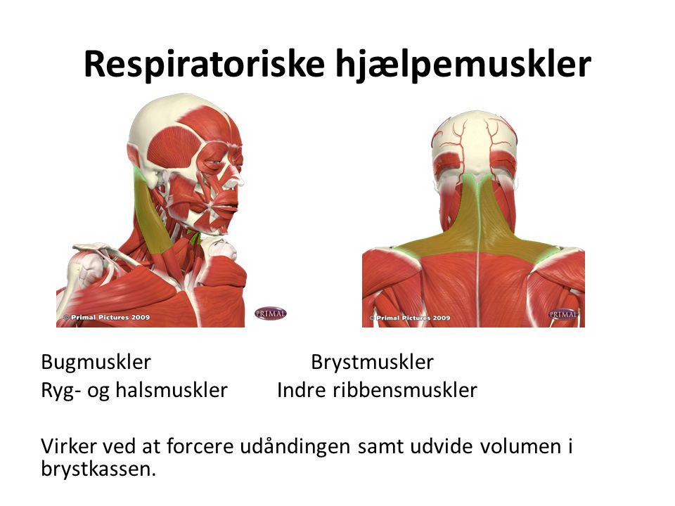 Respiratoriske hjælpemuskler BugmusklerBrystmuskler Ryg- og halsmusklerIndre ribbensmuskler Virker ved at forcere udåndingen samt udvide volumen i bry