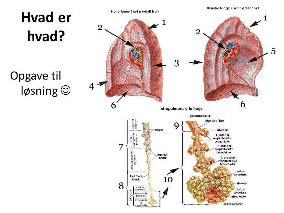 Restluft i lungerne RV er den luft som altid vil stå i lungerne (Residual Volumen) Ca.