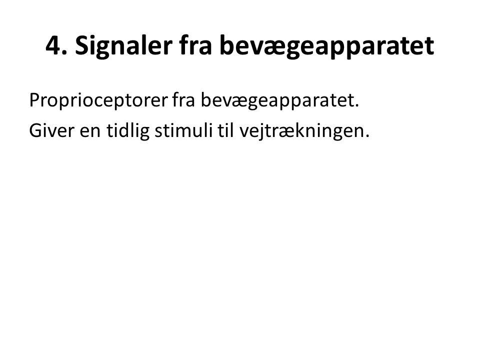 4. Signaler fra bevægeapparatet Proprioceptorer fra bevægeapparatet. Giver en tidlig stimuli til vejtrækningen.