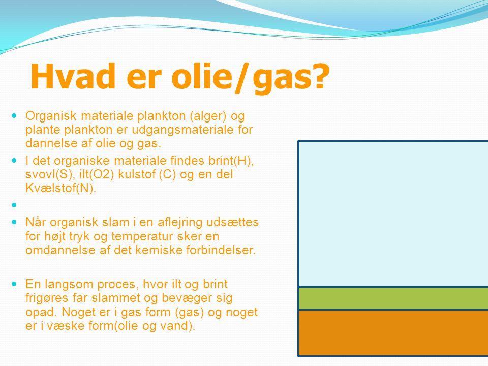 Hvad er olie/gas?  Organisk materiale plankton (alger) og plante plankton er udgangsmateriale for dannelse af olie og gas.  I det organiske material