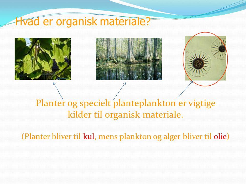 Hvad er organisk materiale? Planter og specielt planteplankton er vigtige kilder til organisk materiale. (Planter bliver til kul, mens plankton og alg
