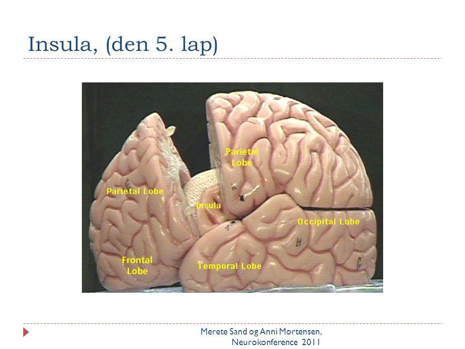 De eksekutive funktioner i præfrontal Dorsolaterale cortex Merete Sand og Anni Mortensen, Neurokonference 2011  Styringsfunktioner for planlægning, dømmekraft, fleksibilitet, opnåelse af mål, refleksion, strategisk tænkning, problemløsning  Fokuseret opmærksomhed  Forbinder tanker – manipulerer og sammensætter på nye måder  Forudsætning for intelligens